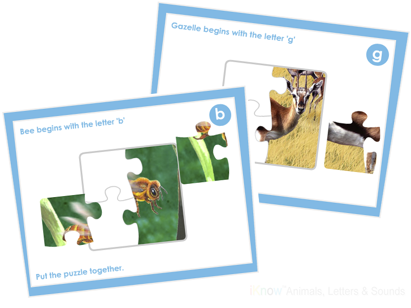 iKnow ABC Rain Forest eBook