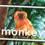Monkey in Tree