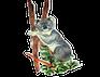 iKnowABC Koala
