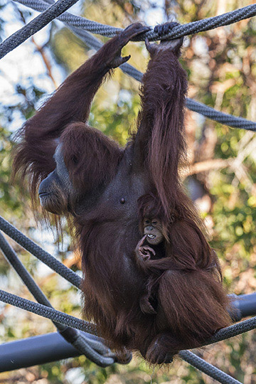 San Diego Zoo – Happy Birthday Aisha