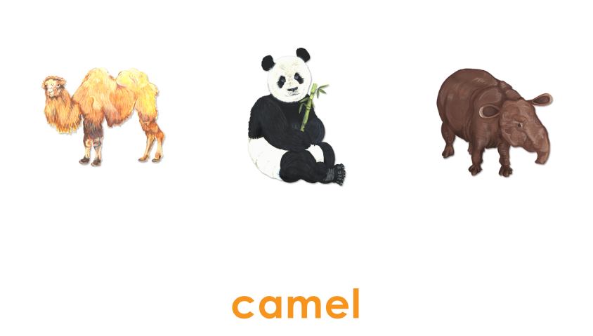 Animal Name Matching