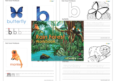 Rain Forest Workbook